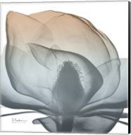 Magnolia Earthy Beauty New Fine-Art Print
