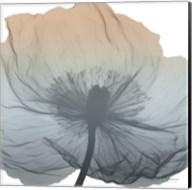 Poppy Earthy Beauty Fine-Art Print