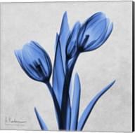 Midnight Tulips Fine-Art Print