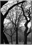 Central Park Dancing Trees Fine-Art Print