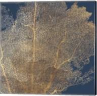 Gold Coral I Fine-Art Print