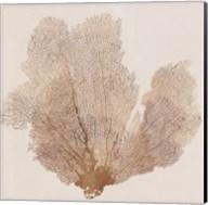 Luxe Coral I Fine-Art Print