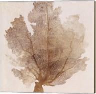 Luxe Coral II Fine-Art Print