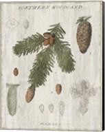 Woodland Chart V Fine-Art Print