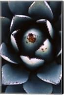 Ladybugs Agave Fine-Art Print