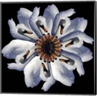 Swan Flower on Black Fine-Art Print