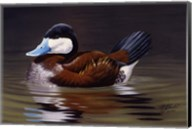 Ruddy Duck Fine-Art Print