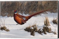 Winter Walk Pheasant Fine-Art Print