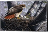 In The Nest Fine-Art Print