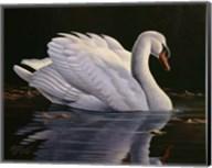 Reflection - Mute Swan Fine-Art Print