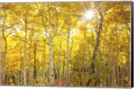 Aspen Morning Fine-Art Print