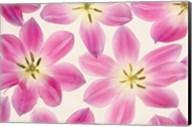 Cerise Pink Tulips Fine-Art Print