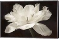 White Tulip I Fine-Art Print