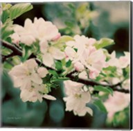 Apple Blossoms I Fine-Art Print