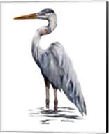 Blue Heron with White Back Fine-Art Print