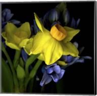 Spring Flowers 1 Fine-Art Print