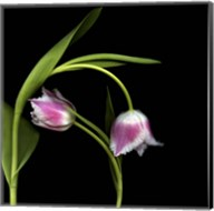 To Love And Protect - Tulips Fine-Art Print