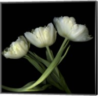 Yellow White Tulips 2 Fine-Art Print