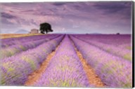 Stone House in Lavender Field Fine-Art Print