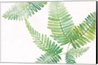 Ferns I Square Fine-Art Print
