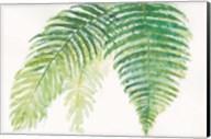 Ferns III Square Fine-Art Print
