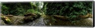 Fern Canyon, Redwood National Park Fine-Art Print
