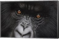 Eyes of Virunga: Mountain Gorilla Fine-Art Print