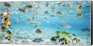 Fish and sharks in Bora Bora lagoon Fine-Art Print