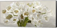 Tulipes Blanches Fine-Art Print