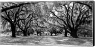 Avenue of Oaks, South Carolina Fine-Art Print