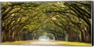 Path Lined with Oak Trees Fine-Art Print