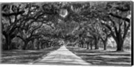 Tree Lined Plantation Entrance,  South Carolina Fine-Art Print