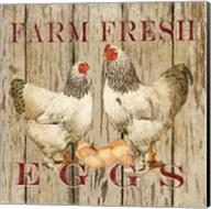 Farm Fresh Eggs II Fine-Art Print
