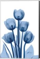 Indigo Spring Tulips 2 Fine-Art Print