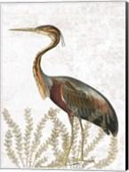 Bird In The Field Fine-Art Print