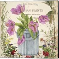 Vintage Tulip Can I Fine-Art Print
