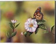 Monarch With Camellia Fine-Art Print