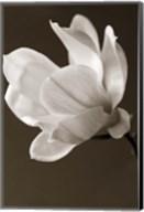 Sepia Magnolia Fine-Art Print