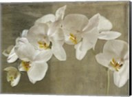Painted Orchid Fine-Art Print