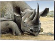 Black Rhino Fine-Art Print