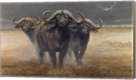 Cape Buffalos Fine-Art Print