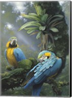 Blue And Yellow Macaws Fine-Art Print