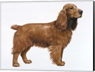 Cocker Spaniel Fine-Art Print