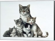 Cat Family Fine-Art Print