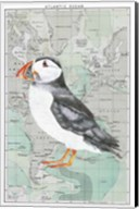 Atlantic Puffin Fine-Art Print