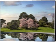 Cherry Tree Reflections Fine-Art Print