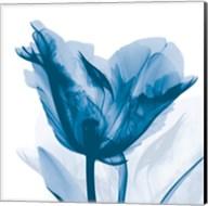 Lusty Blue Tulip Fine-Art Print
