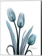 Midnight Sky Tulip Trio Fine-Art Print