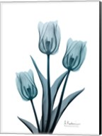 Midnight Sky Tulip Trio 2 Fine-Art Print