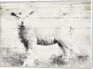 Vintage Lamb Fine-Art Print